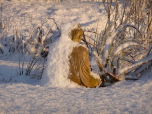 Snow Angel hugging the Buddha in the garden of the Healthy Home