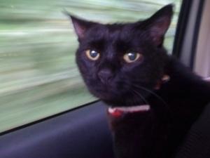 poppy-in-car